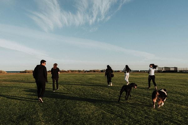 Group of owners walking their dogs at park