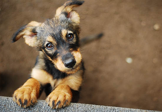Puppy Looking Up